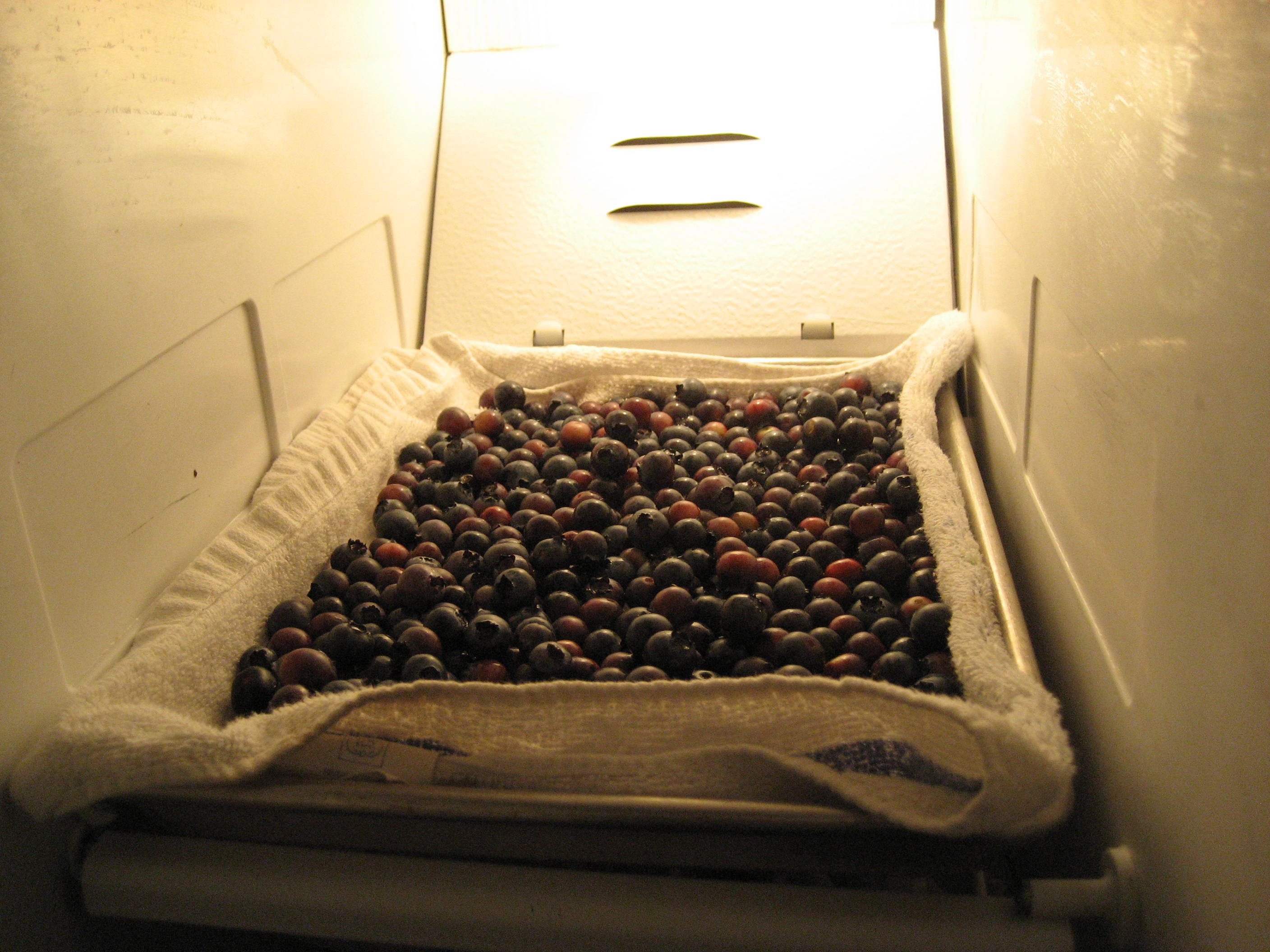 Picture of Place in Freezer