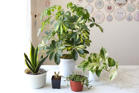 Pros and Cons of Plastic Pots