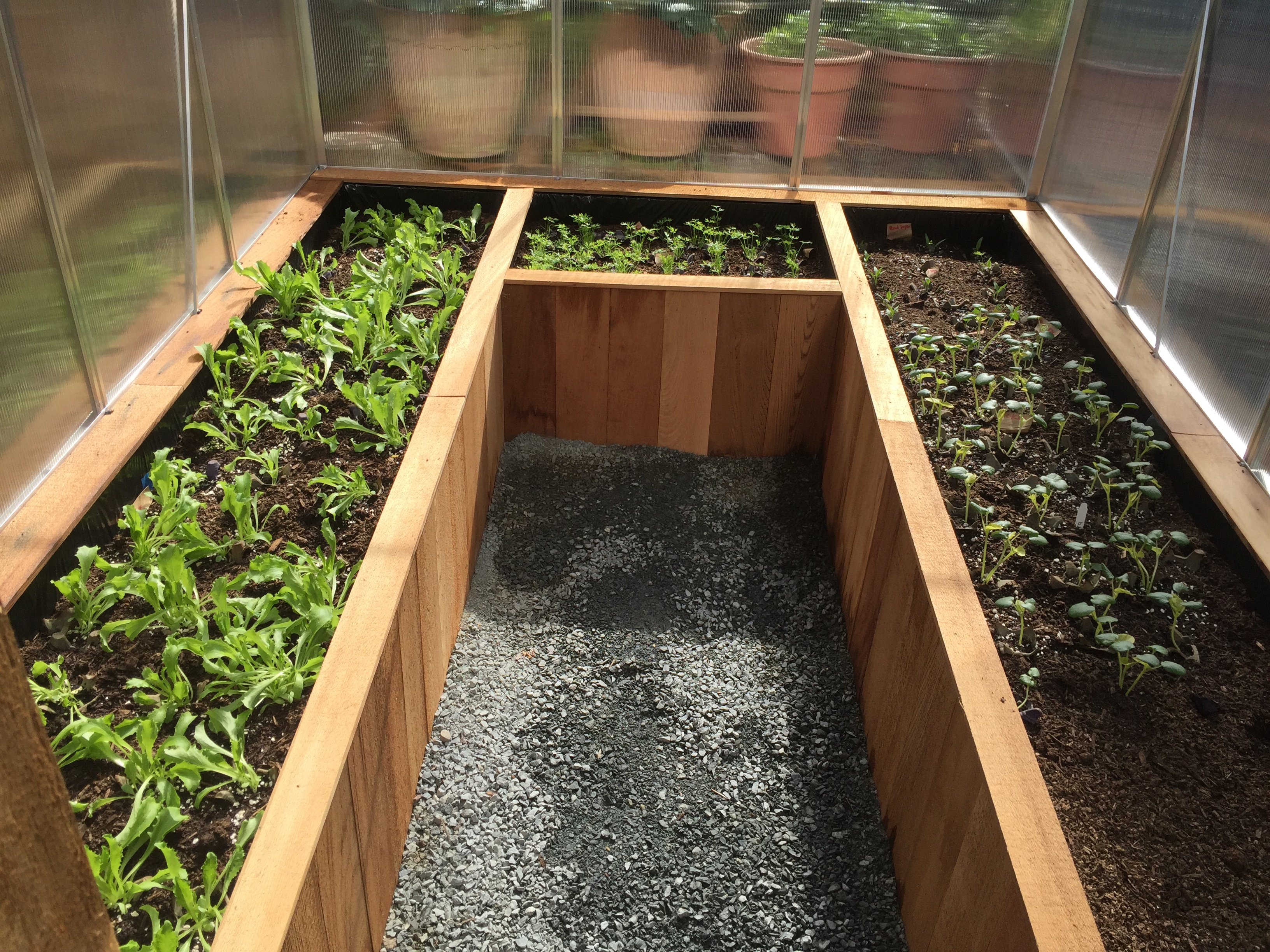 Picture of Dirt and Initial Planting