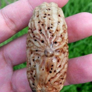 How to Use a Pipal Tree Seed Make a Pendant for Bracelet Necklace