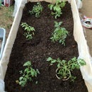 Backyard Garden Boxes - On the Cheap!