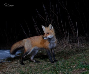 Building an Active Infrared DSLR Camera Trap for Wildlife Photography