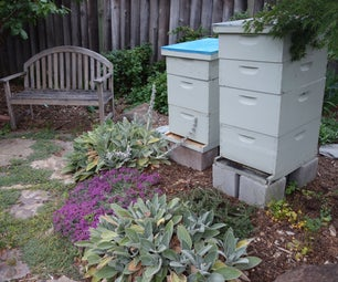 Backyard Bees in the 'burbs