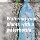 Watering Plants With Waterbottle Hack