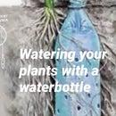Watering Plants With Waterbottle Hack