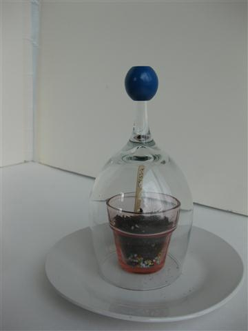 Picture of Other Examples of Shot & Wine Glass Terrarium / Seed Starter