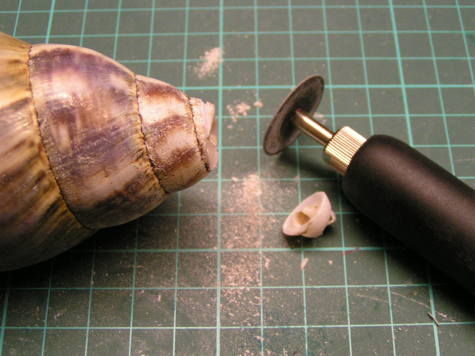 Picture of Making the Horn
