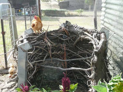 Make a Chicken Coop From Farm Junk