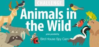Animals in the Wild Challenge