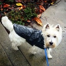 Quick Cheap Doggy Rain Jacket