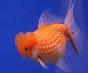 How to Make Your Goldfish Thrive @ Home