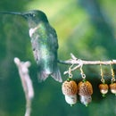 Acorn Cap Earrings