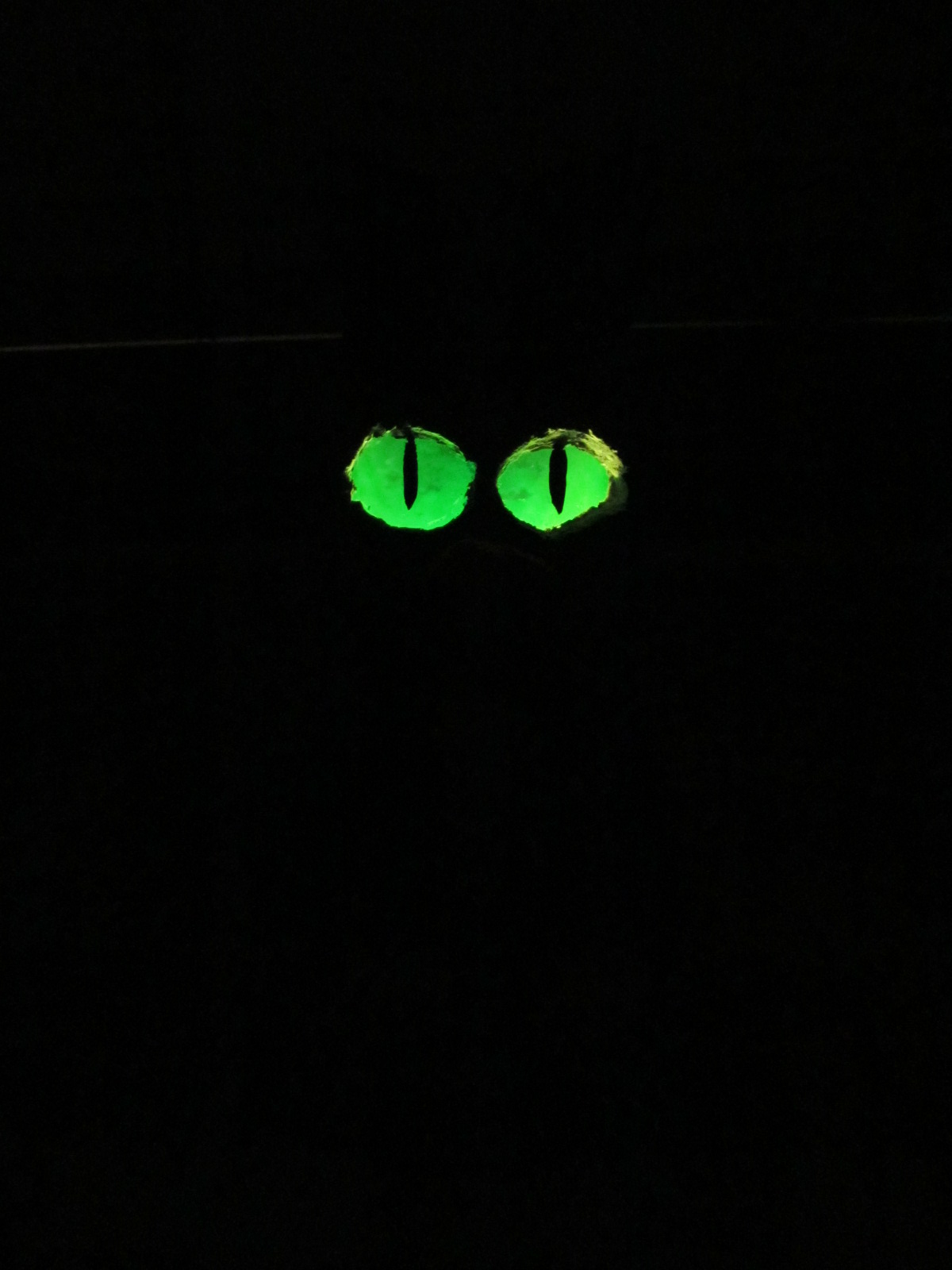 Picture of Glowing Cat Eyes