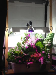 A Small DIY Home Hydroponics Setup
