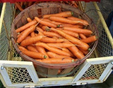 Carrots,watering,planting,growing Climates,soil