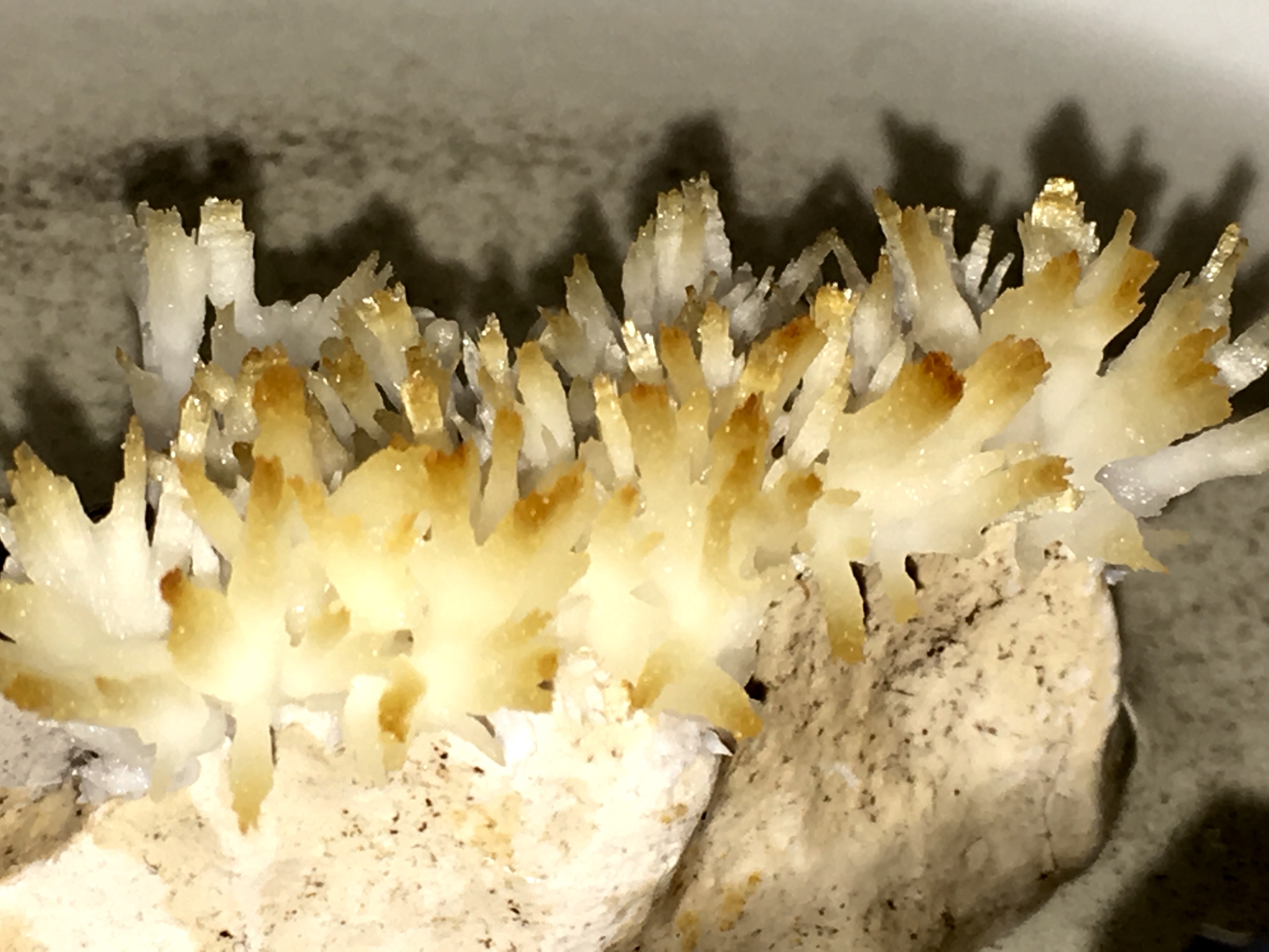 Picture of Grow Miniature Coral From Calcium Acetate