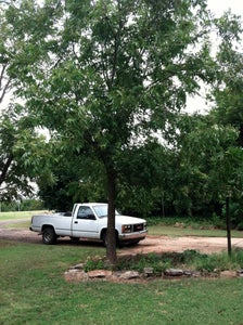 Beautiful Trees That Produce a Cash Crop.  $$$$