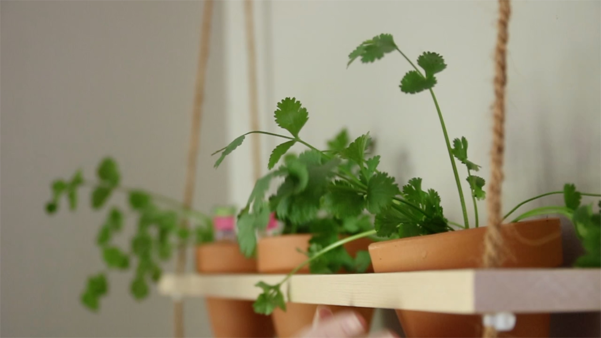 Picture of Fill the Pots With Plants