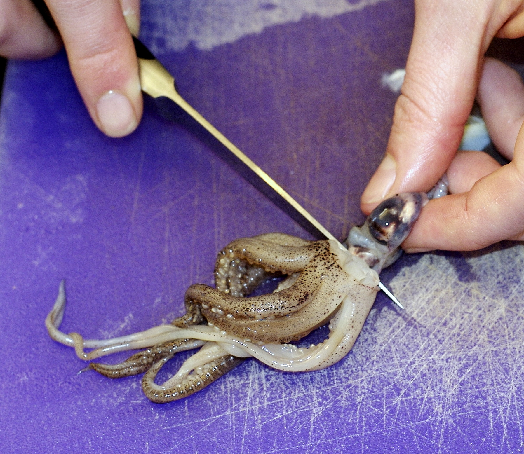 Picture of Clean and Chop Squid