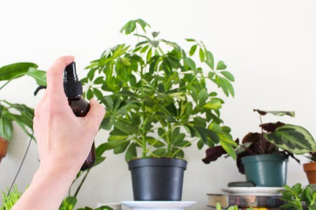 Misting Plants to Increase Humidity