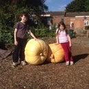 Super Sized Pumpkins