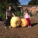 Super Sized Pumpkins
