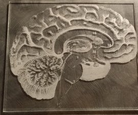 Brain Diagram Etched by Laser Cutter on Plexiglass