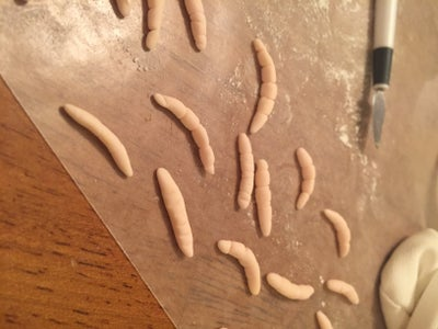 Maggots and Worms