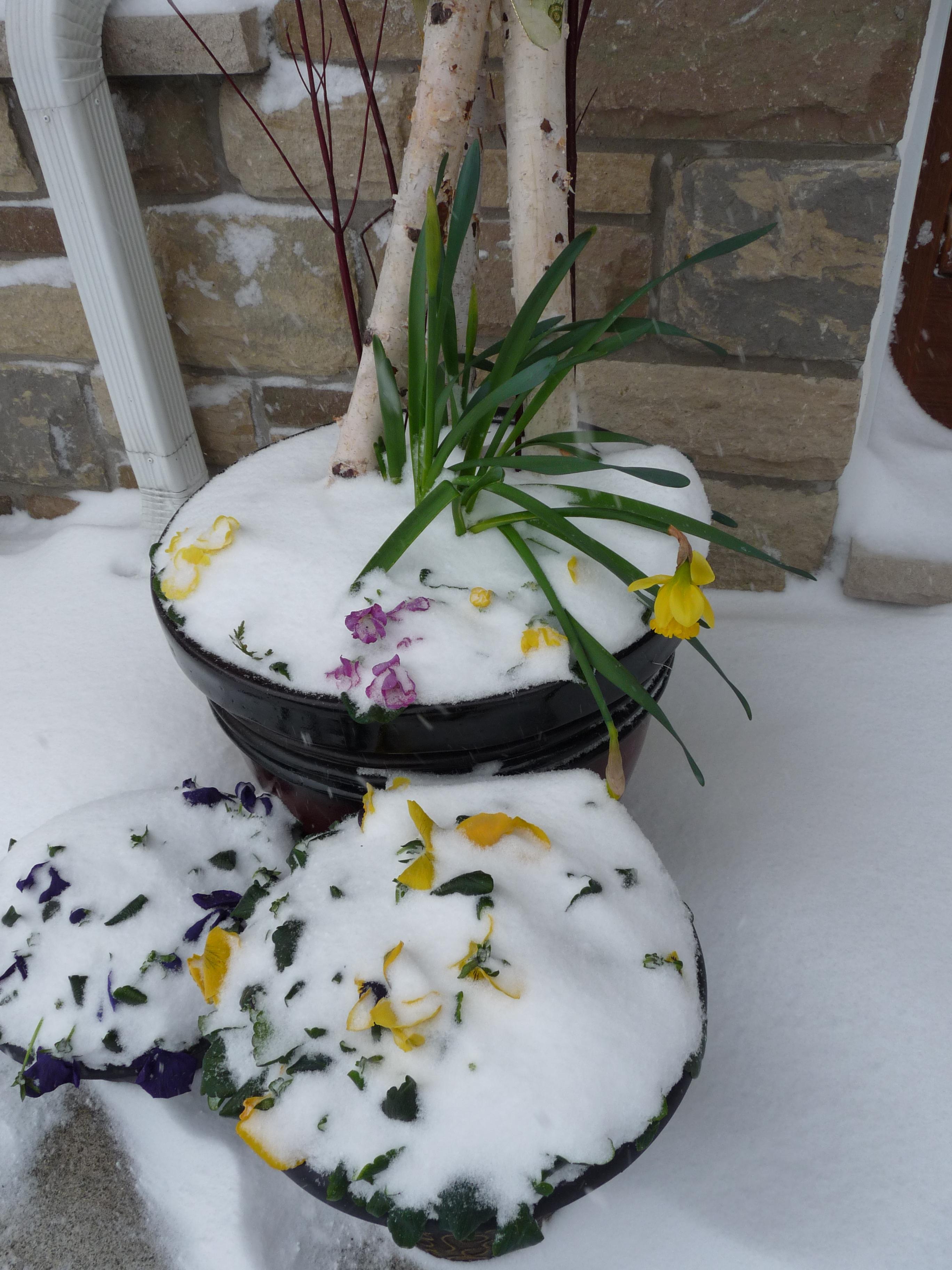 Picture of Winter Flower Arangements...