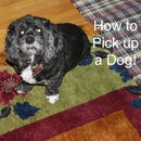 How to Pick up a Dog!