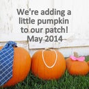 Fall Pumpkin Pregnancy Announcement