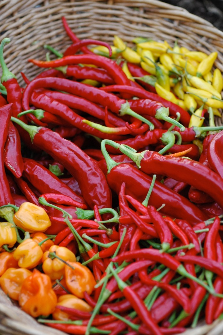 Picture of The Peppers
