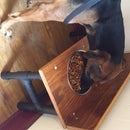 Elevated Dog Dish and Controlling Mice
