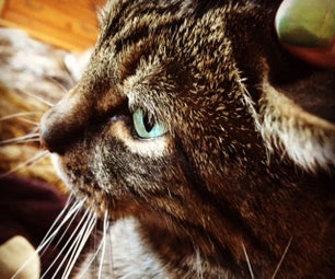 Great Cell Phone Pet Photos - Part 1