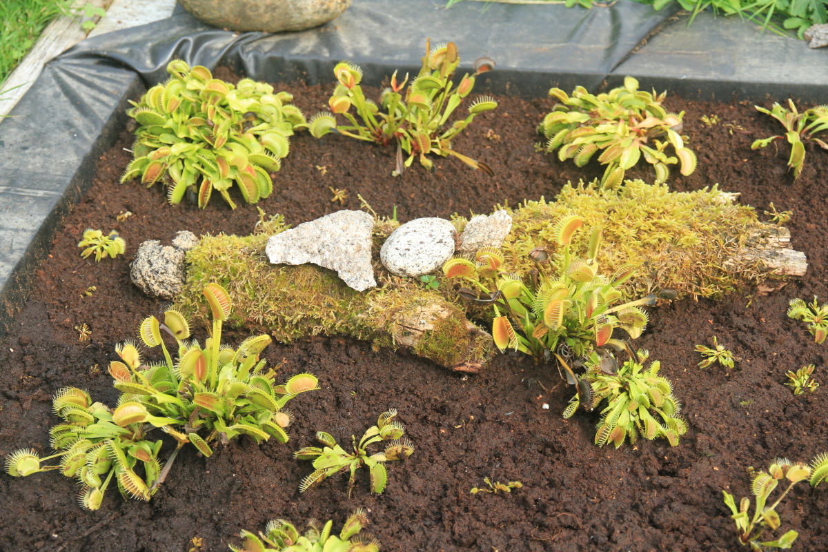 Picture of Artificial Peat Bog for Carnivorous Plants