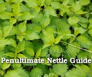 The Penultimate Nettle Guide