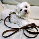 Leather Dog Harness & Strap! 1 HOUR!