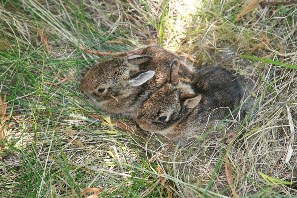 Rabbit Hole How To Find And Catch Wild Rabbi – Meta Morphoz