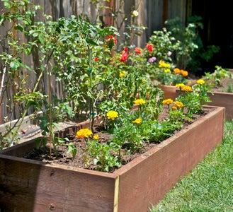 Grow Vegetables in Your Backyard