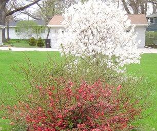 Deb's Garden in Iowa