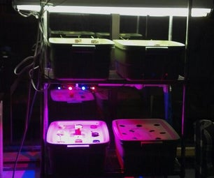 Mike's Third Aquaponics System (Gamma Tower)