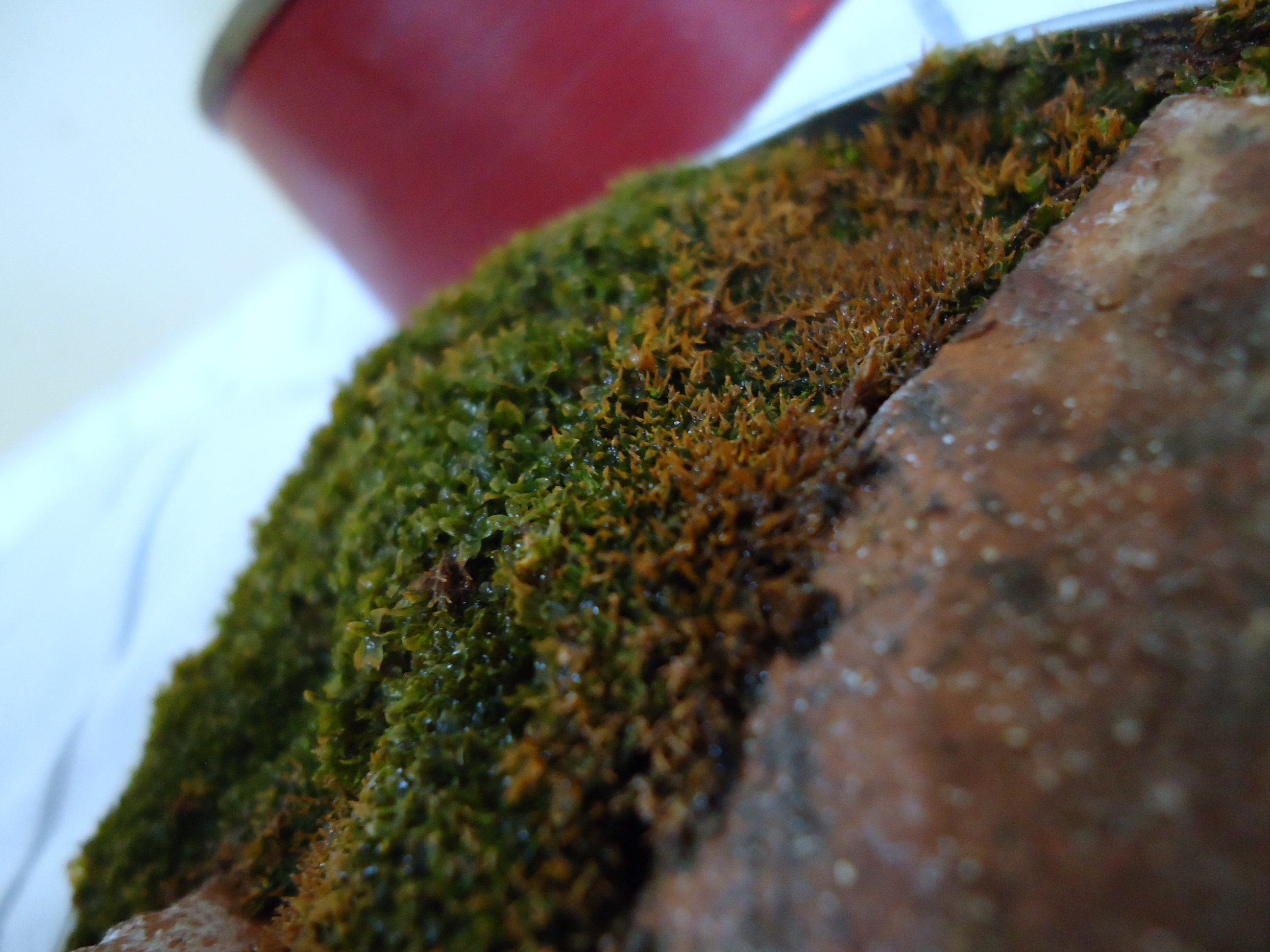 Picture of Fifth Type Plant Pot - Moss