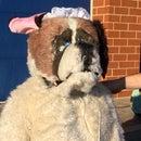 """Nana"" Costume, St. Bernard Dog Costume From Disney Peter Pan"