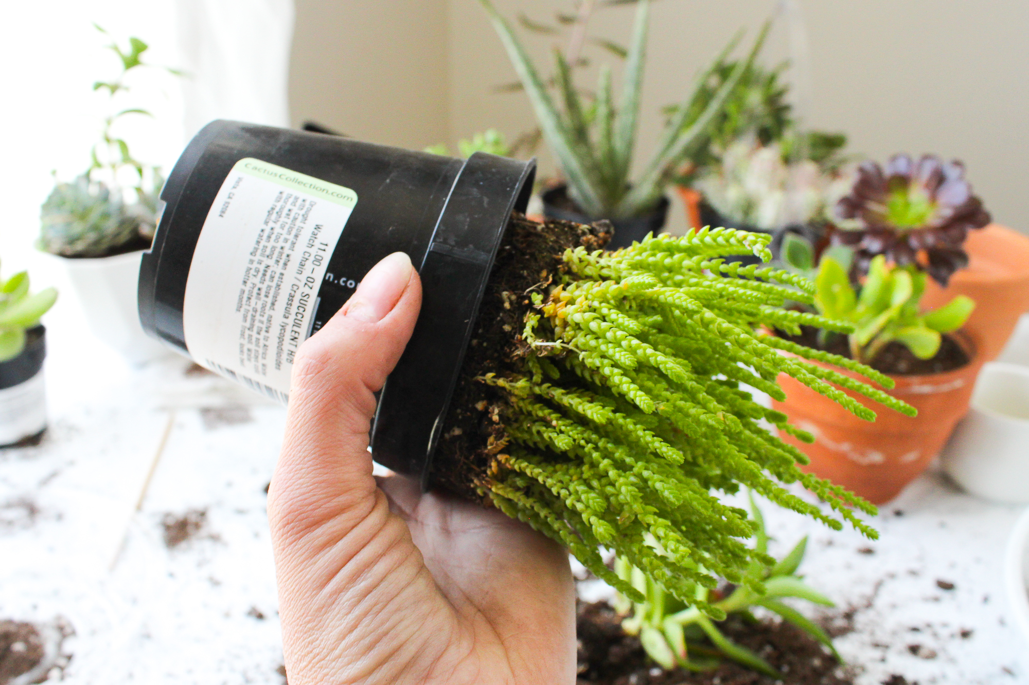 Picture of How to Remove Plants From a Plastic Pot