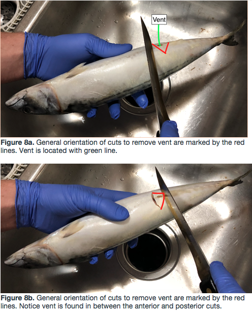 Picture of Cutting Out the Fish's Vent