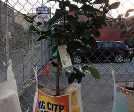 Make a Fruit Fence Planter
