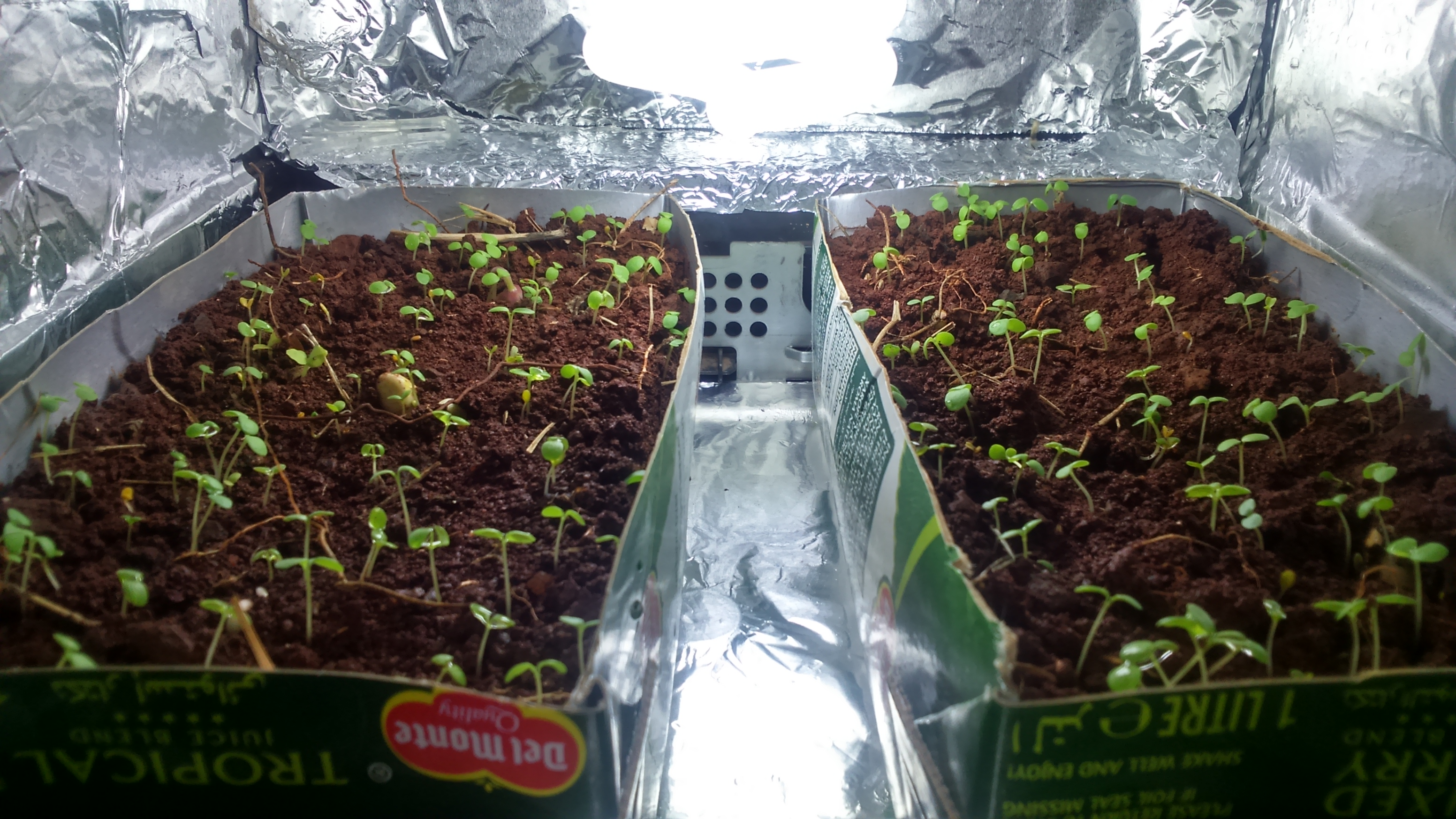 Picture of Growing Plants
