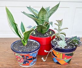 How to Plant Small Snake Plants & Succulents in Small Pots