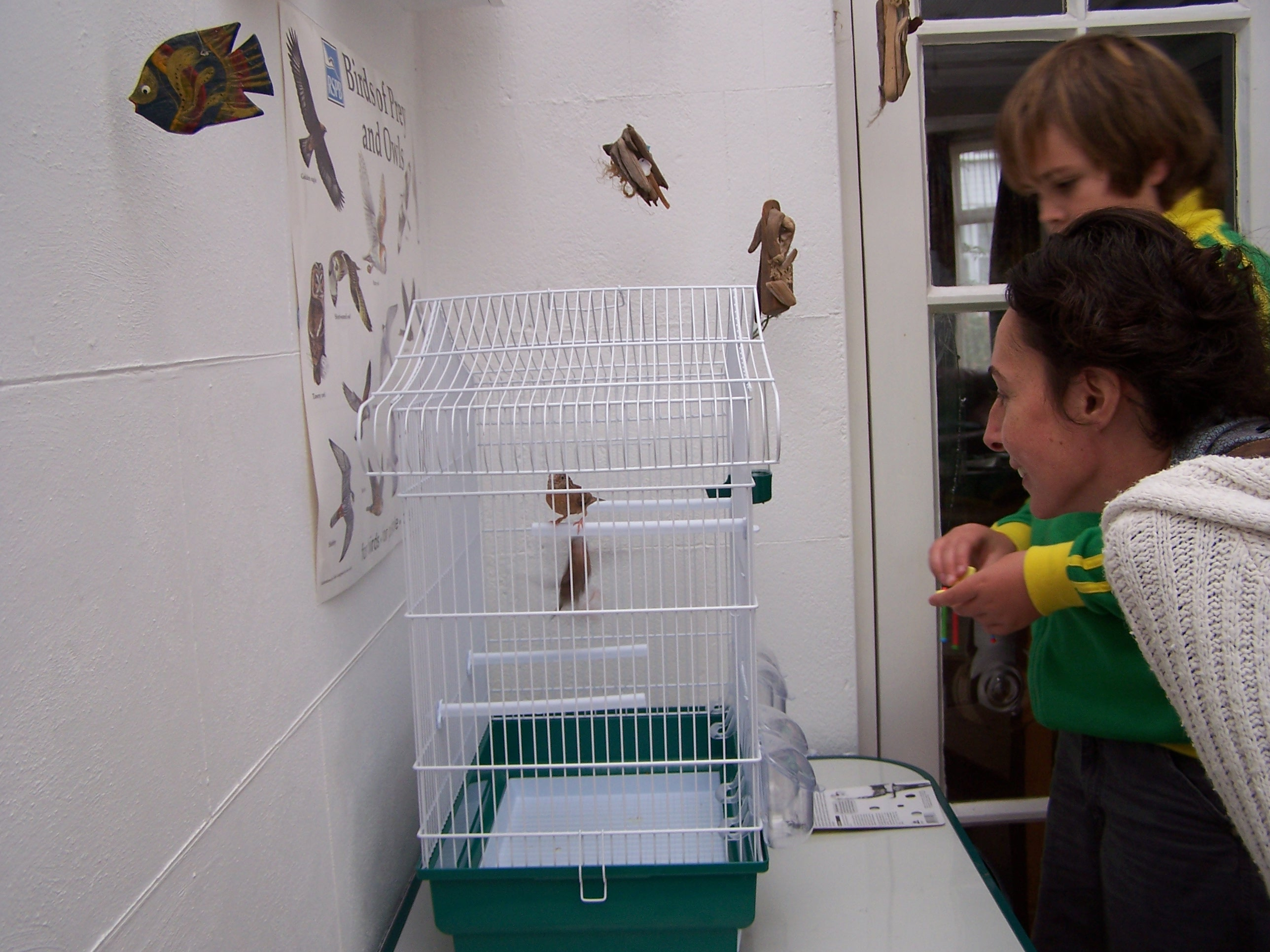 Picture of AVIARY ROOST