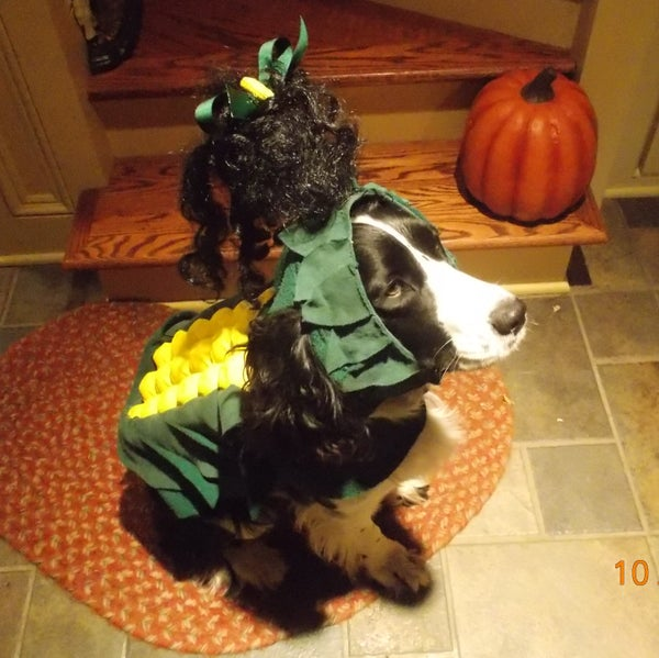 """SWEET CORN"" Dog Costume"